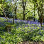 Bluebell Walk @ Otford Manor - Sunday 15 May