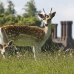 Youth Group - Knole Park Picnic